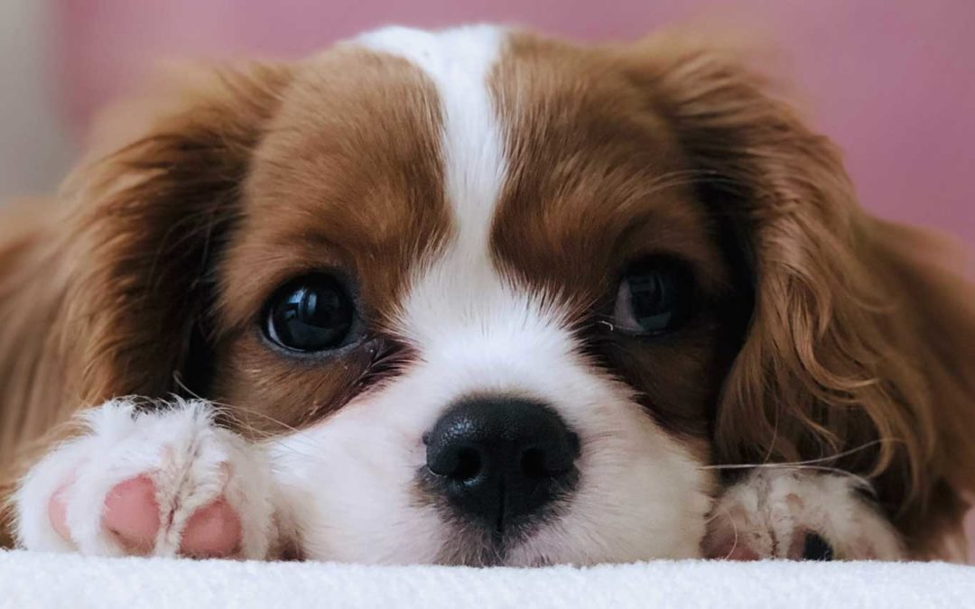 How the Wrong Questions Kill Puppies